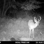 Deer Cam 2017